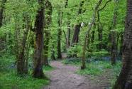 kingsdown-woods